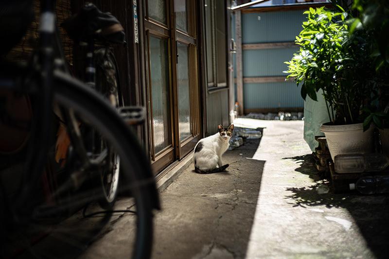 2019/06/18 三ノ輪リターンズ_b0171364_10591815.jpg