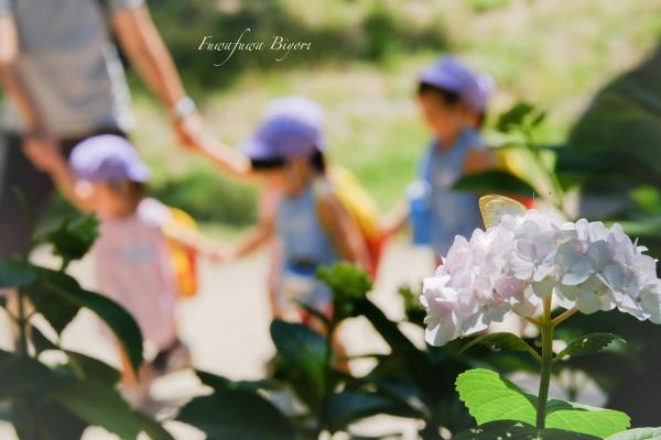 紫陽花の向う側 **_d0344864_21485263.jpg