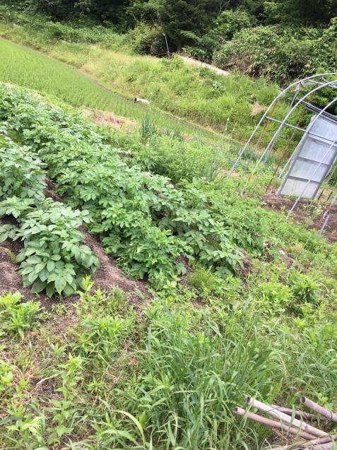 ゲストハウスと家庭菜園_b0270977_03511908.jpg