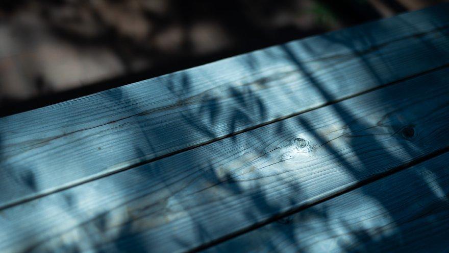 色を主張する水無月の光蜥蜴_d0353489_18561080.jpg
