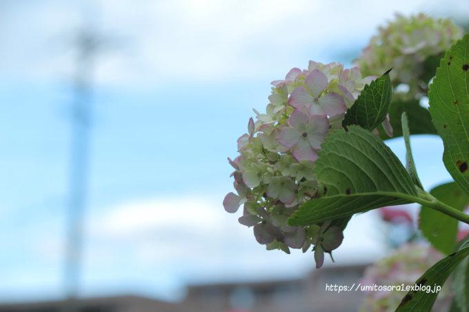 街に咲く_b0324291_22074703.jpg