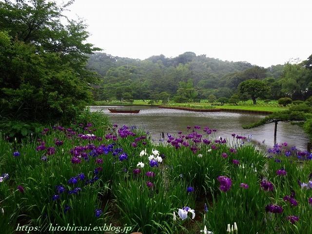三渓園の花菖蒲_f0374092_23504200.jpg