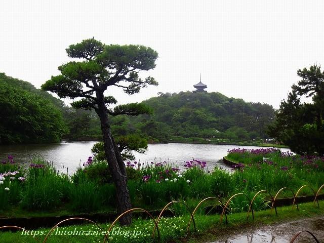 三渓園の花菖蒲_f0374092_23591055.jpg