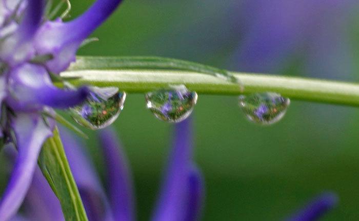 水滴・・3_d0162994_06350652.jpg