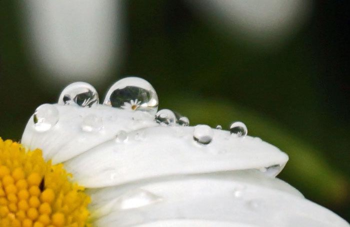 水滴・・3_d0162994_10275182.jpg