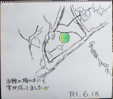 今年は梅狩り行ってきました!_b0364195_09062199.jpg