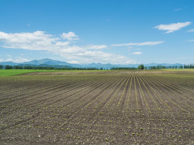 真っ平に見える村の農村風景も良く見ると少しうねってますね!_f0276498_21043232.jpg