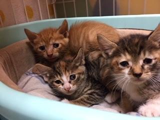また子猫3匹保護しました。 - 青梅にゃんにゃん・サークル「WISH」