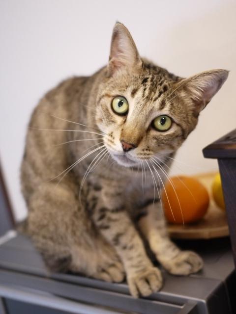 猫のお留守番 がうくん編。_a0143140_23471327.jpg