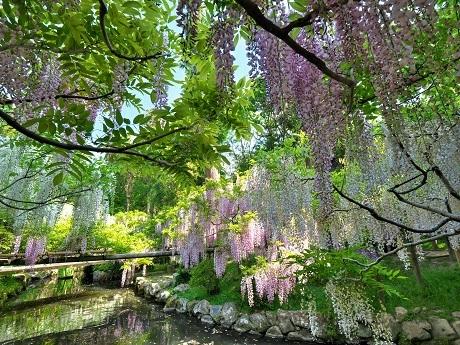 萬葉植物園_c0057946_21045964.jpg