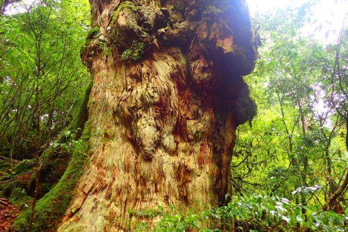 木々は治療師_b0160957_17080225.jpg
