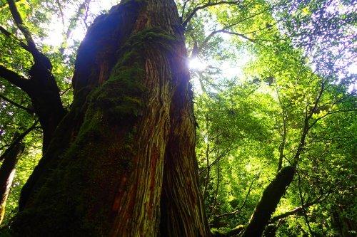 木々は治療師_b0160957_17084062.jpg