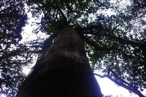 木々は治療師_b0160957_17085849.jpg