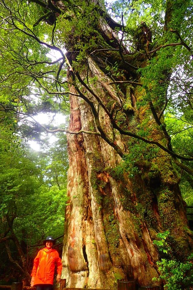 木々は治療師_b0160957_17091102.jpg