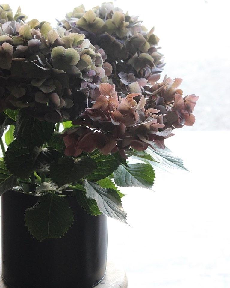 紫陽花の鉢_e0146469_10002396.jpeg