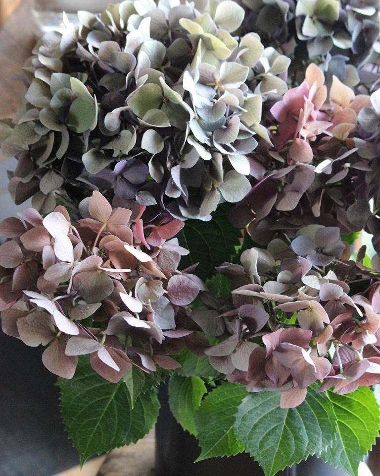 紫陽花の鉢_e0146469_10003980.jpeg
