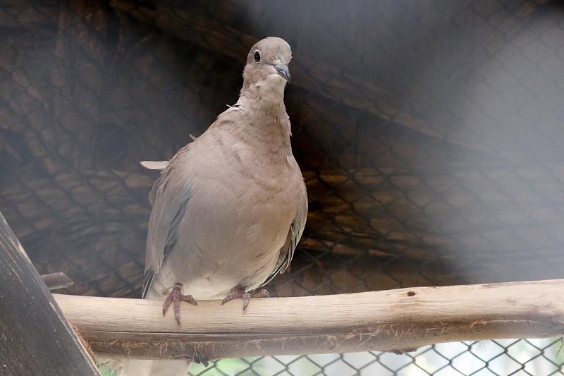 小さな野鳥園に・・・_f0368272_21431195.jpg
