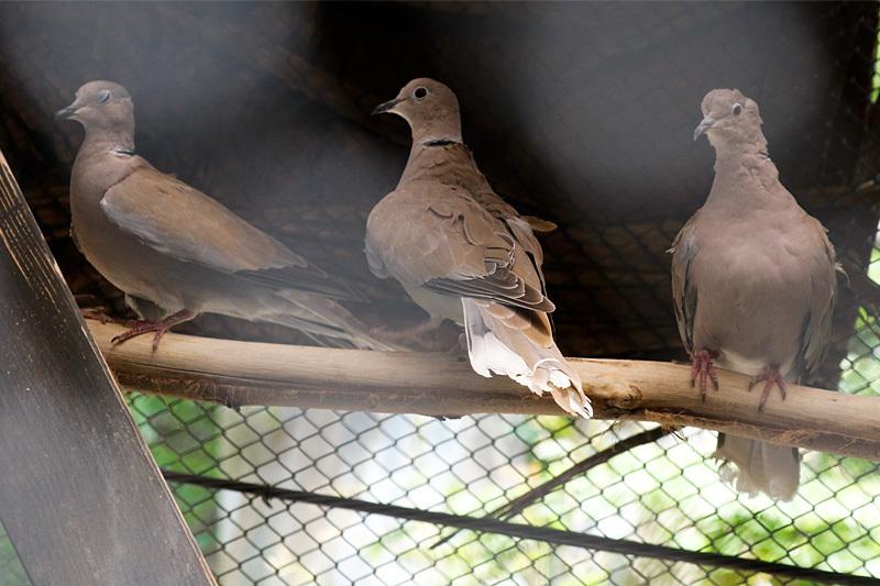 小さな野鳥園に・・・_f0368272_21432242.jpg
