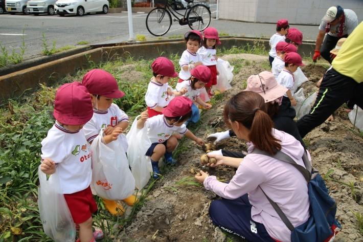 りんご・年少組 じゃがいも掘り_b0277979_17000133.jpg