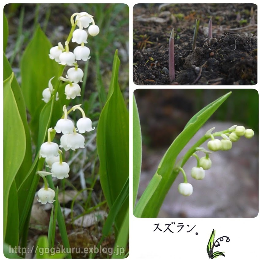 【English】lily of the valley_e0132084_07502379.jpg