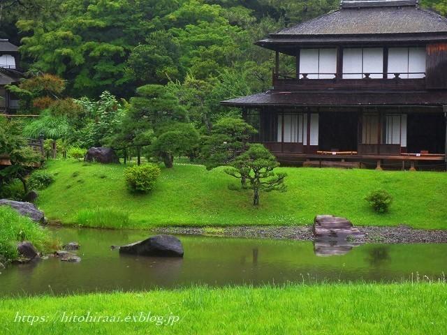 三渓園の花菖蒲_f0374092_00014188.jpg