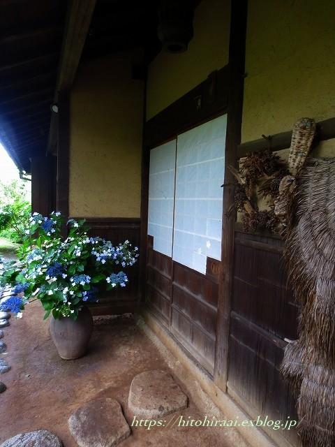 三渓園の花菖蒲_f0374092_00122210.jpg