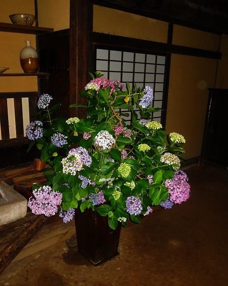三渓園の花菖蒲_f0374092_00161210.jpg