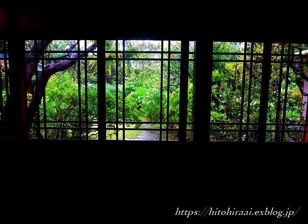 三渓園の花菖蒲_f0374092_00164438.jpg