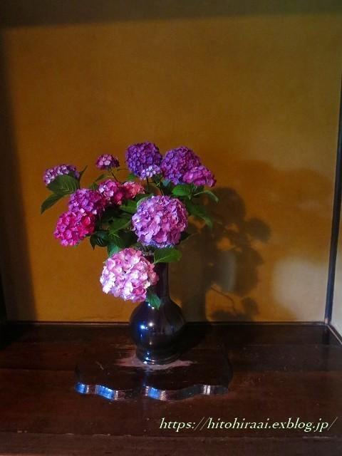 三渓園の花菖蒲_f0374092_00181402.jpg