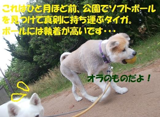 f0121712_23122615.jpg