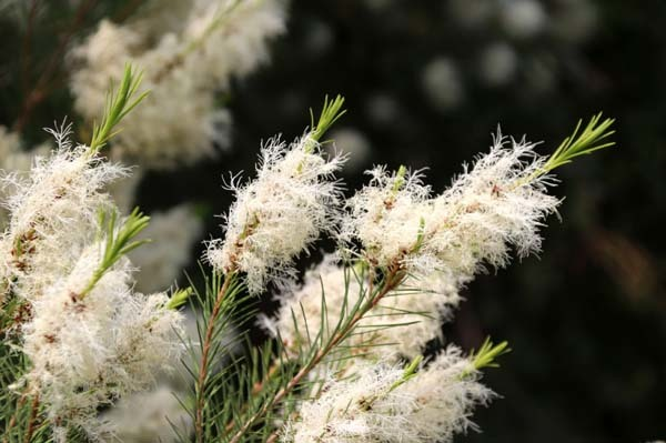 府立植物園 夏花いっぱい_e0048413_18120945.jpg