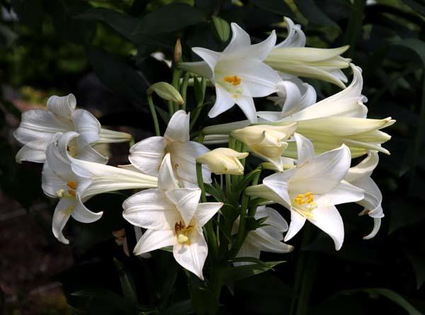 府立植物園 夏花いっぱい_e0048413_18123534.jpg