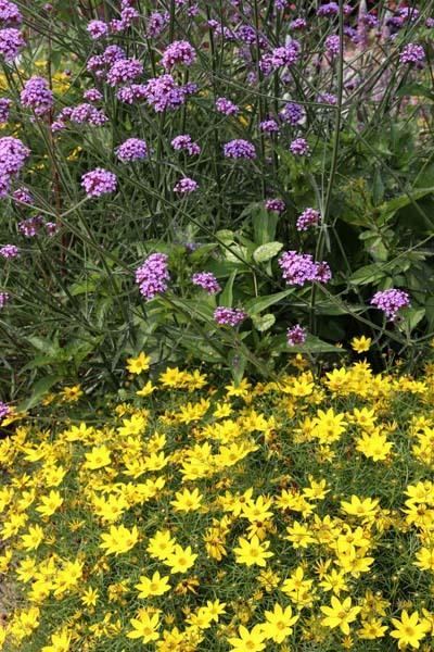府立植物園 夏花いっぱい_e0048413_18124463.jpg