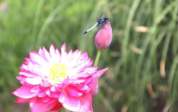 府立植物園 夏花いっぱい_e0048413_18125416.jpg
