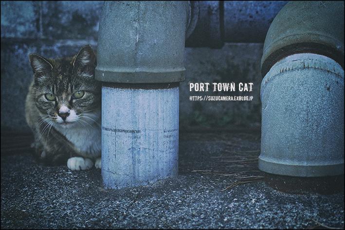 港町猫町_f0100215_21220029.jpg