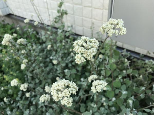 花のキロク。2._b0157216_22524300.jpg