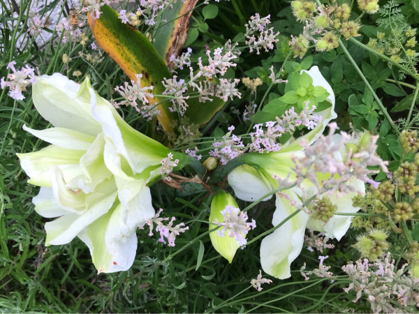 花のキロク。2._b0157216_23240526.jpg