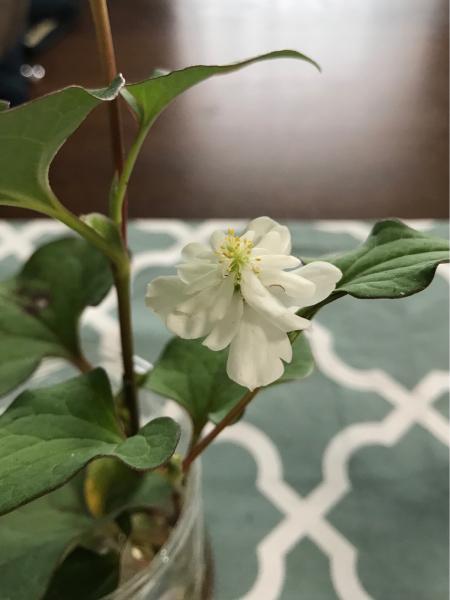花のキロク。2._b0157216_23435649.jpg