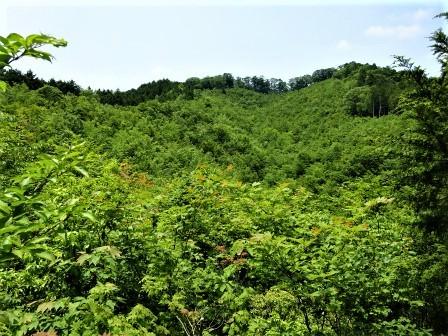 みんなの森活動日記_d0105723_08550185.jpg