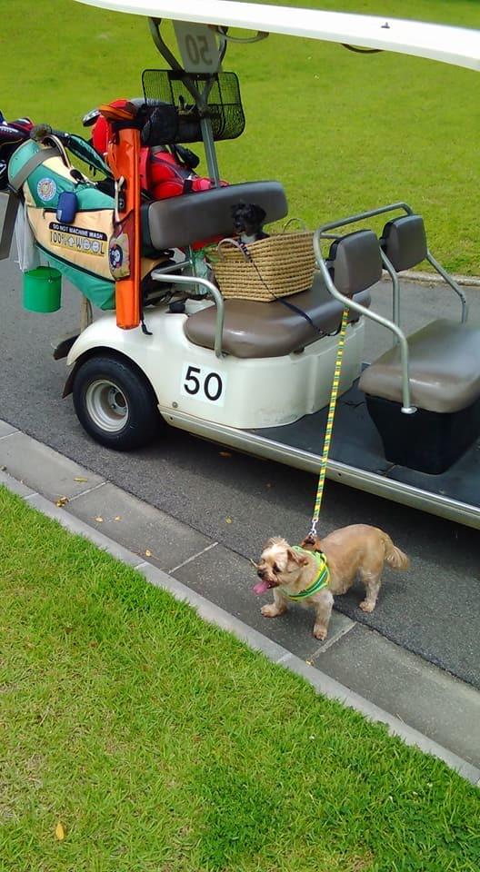 犬とゴルフ_d0228130_08252444.jpg