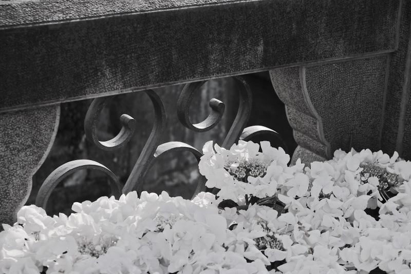 眼鏡橋と紫陽花 モノクロ_f0315034_13490161.jpg