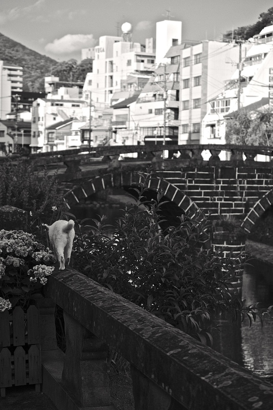 眼鏡橋と紫陽花 モノクロ_f0315034_13492718.jpg