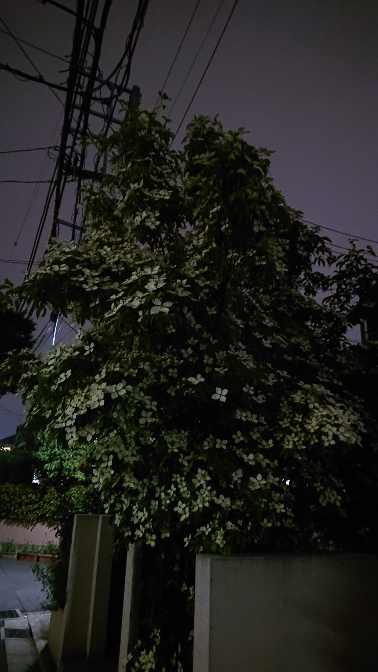 ホンコンエンシス月光~月光の輝き〜_d0155439_19085951.jpg