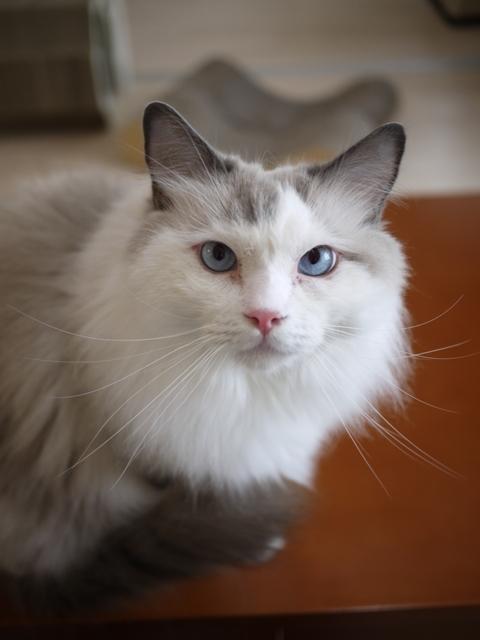 猫のお留守番 小石丸くん編。_a0143140_22061715.jpg