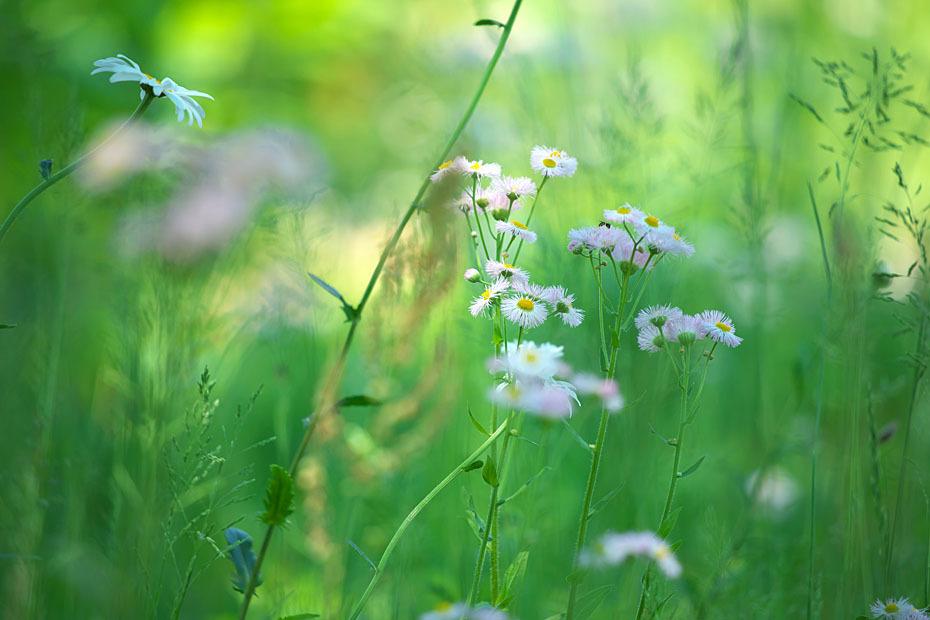 草むらにて #2_c0067040_17333495.jpg