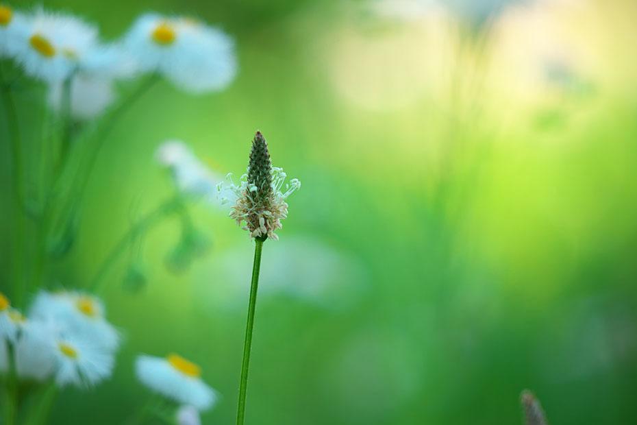 草むらにて #2_c0067040_17350153.jpg