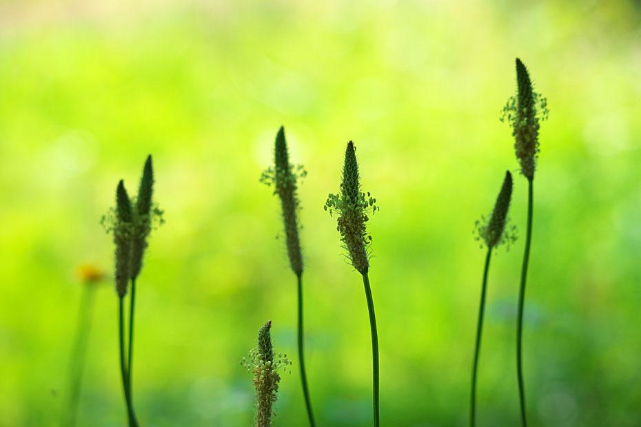 草むらにて #2_c0067040_17351864.jpg
