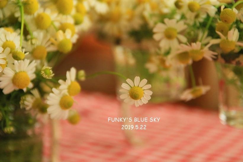 庭の小さなブーケ** (5月22日)_c0145250_11484266.jpg