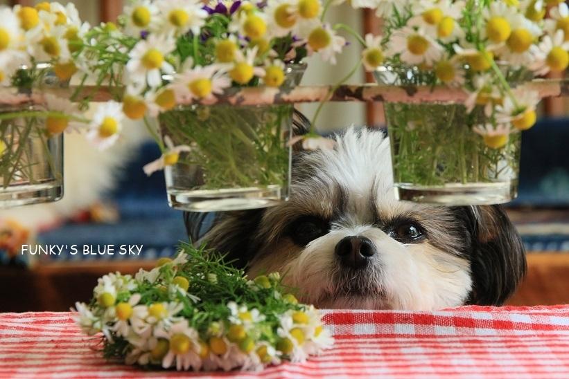 庭の小さなブーケ** (5月22日)_c0145250_11485786.jpg