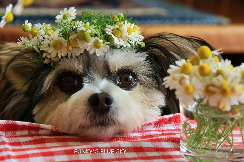 庭の小さなブーケ** (5月22日)_c0145250_11485953.jpg